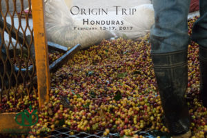 Visiting coffee farms and mills near Lake Toba in Sumatra, Indonesia.