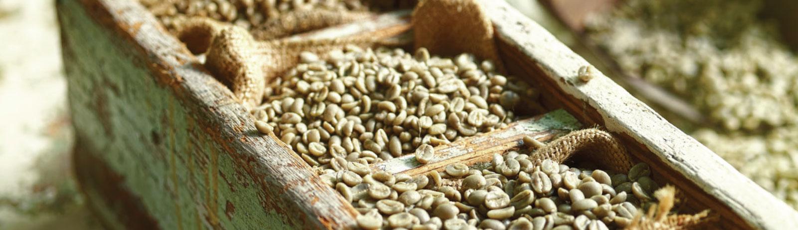 Peru FTO Naranjillo