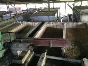 coffee-drying-field-kigabah