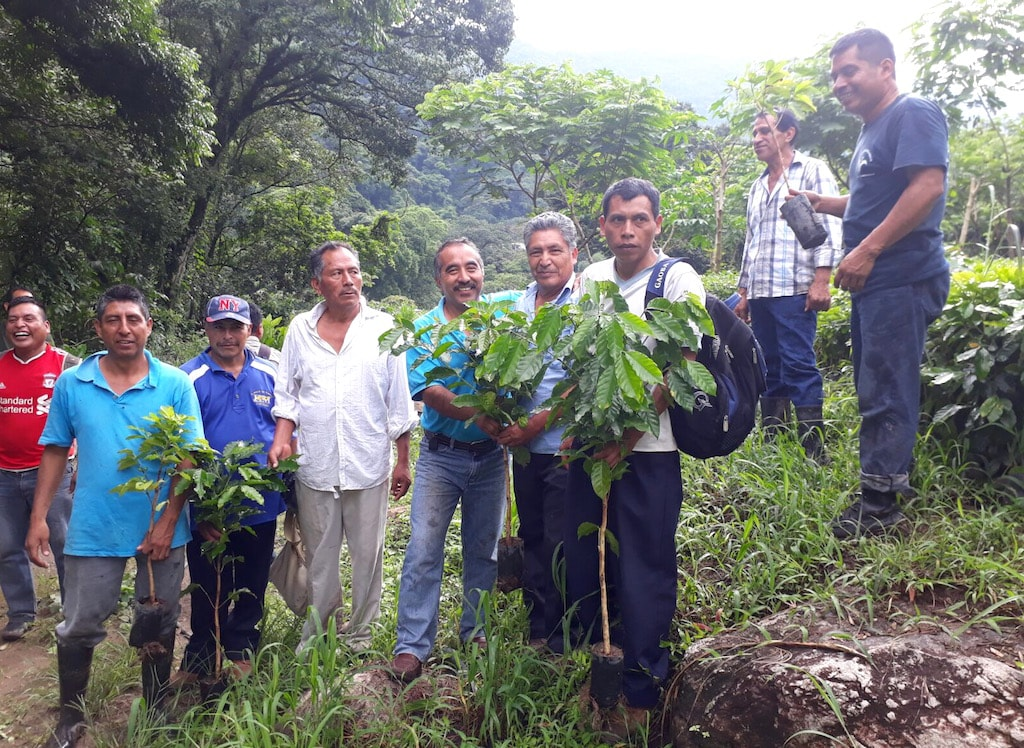 Producers of MOCABE Organic green coffee