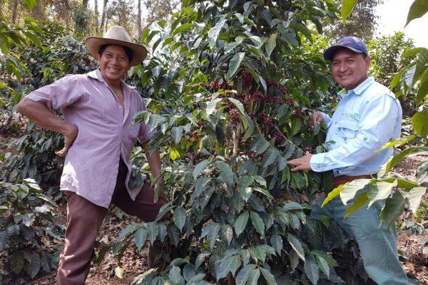Guatemala green coffee