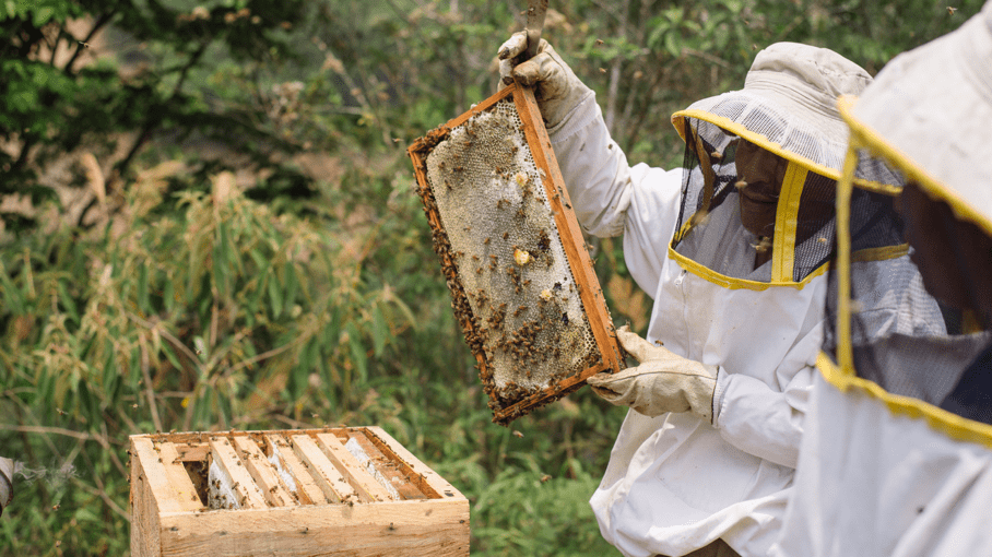 Domingo de la Cruz Toma inspects a beehive.