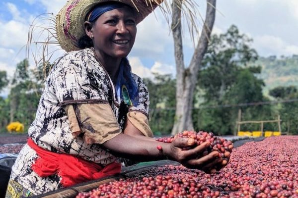 Daye Bensa coffee farm