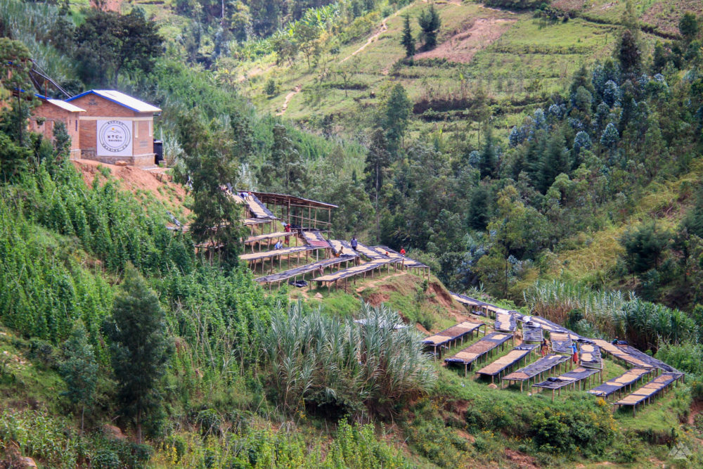 Shyira green coffee mill in Rwanda