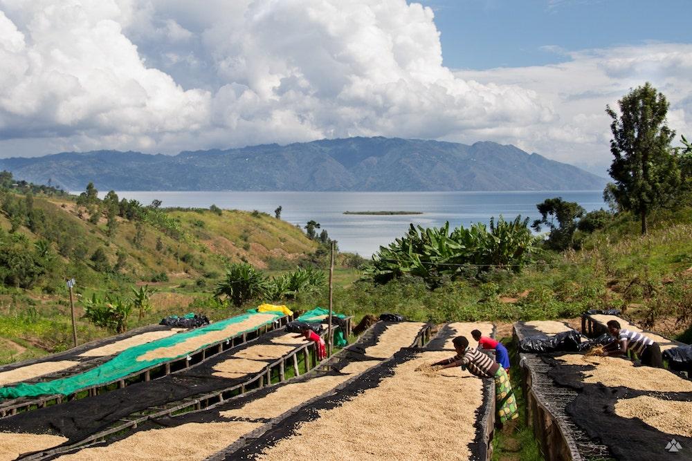Rwanda Gisheke washing station.