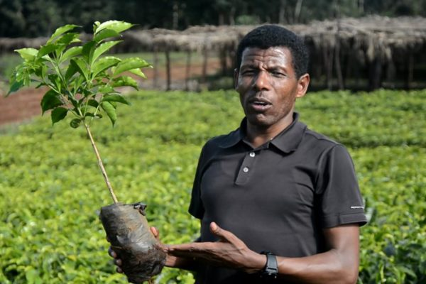 Olympic athlete and coffee farmer Haile Gebrselassie.